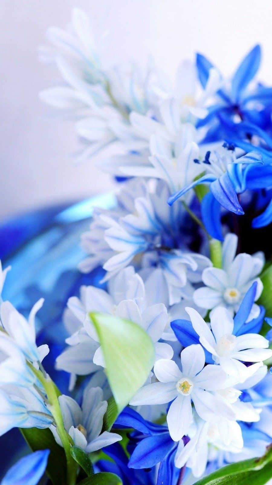 Blue White Flowers Wallpaper iPhone ...