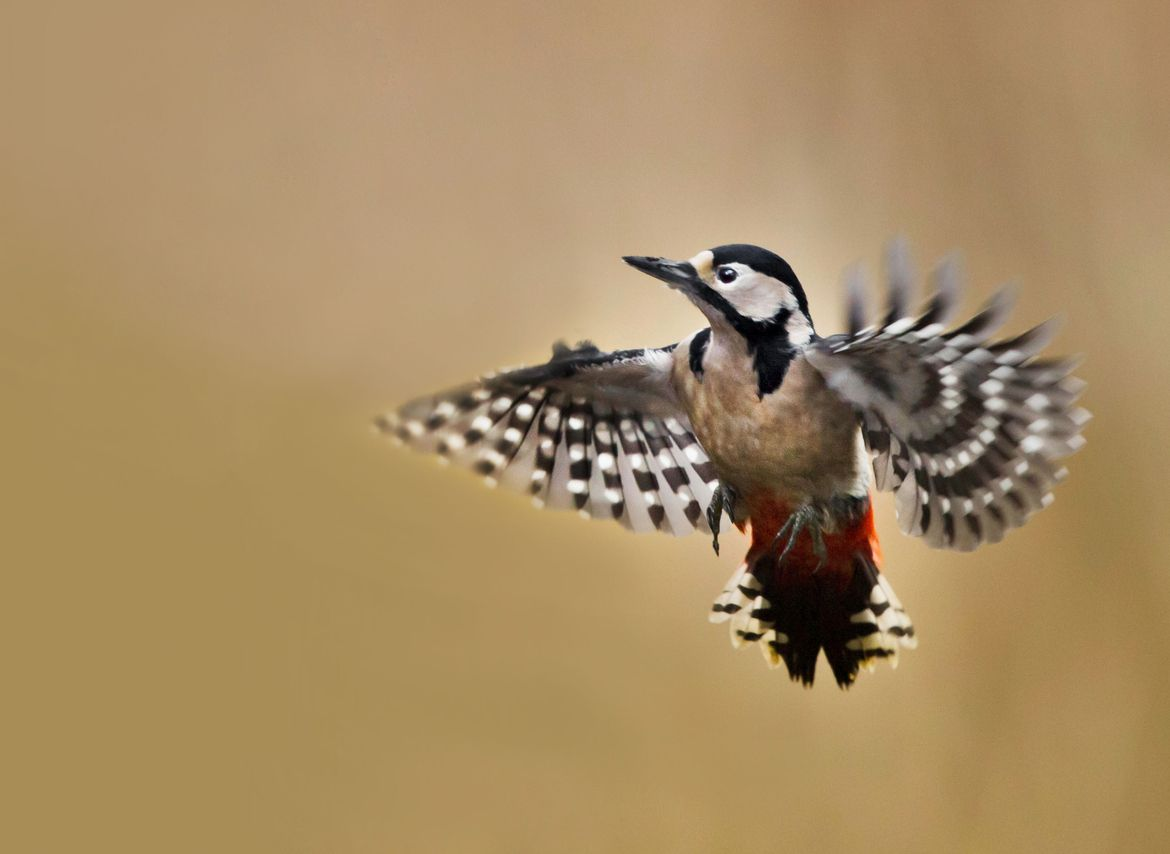 Hovering! by Sue Demetriou on 500px