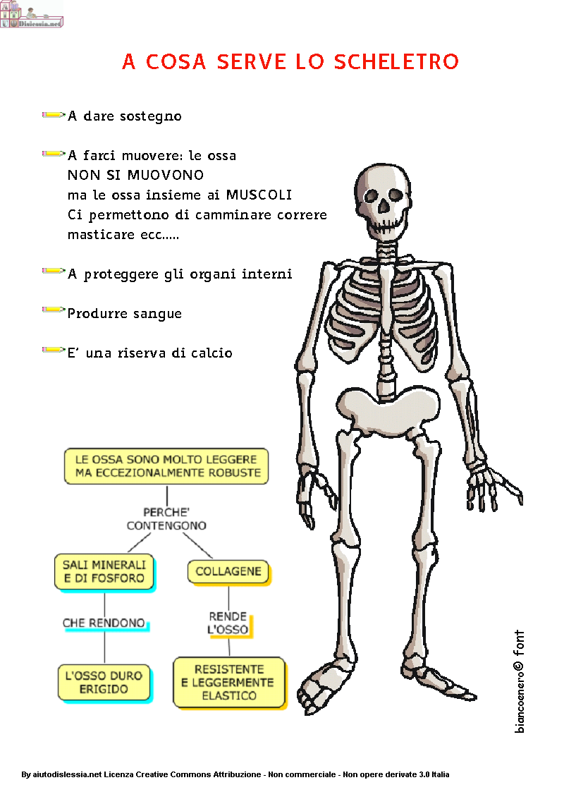 apparato scheletrico scuola primaria pdf