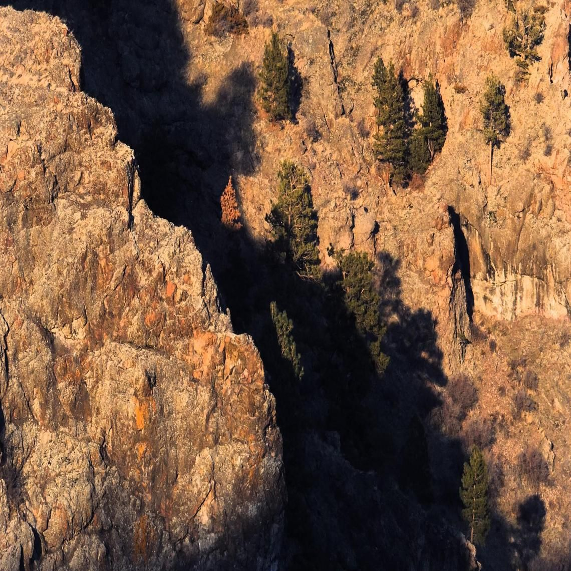 Trees in a canyon