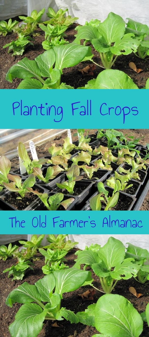 planting a fall garden can be easy fun and rewarding learn how