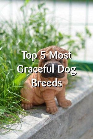 Sally McDonald Tells About Top 5 Most Graceful Dog Breeds #dogsdiys#dogslove#dogdiystuff#dogquotes#petscats#puppyideas#doglife
