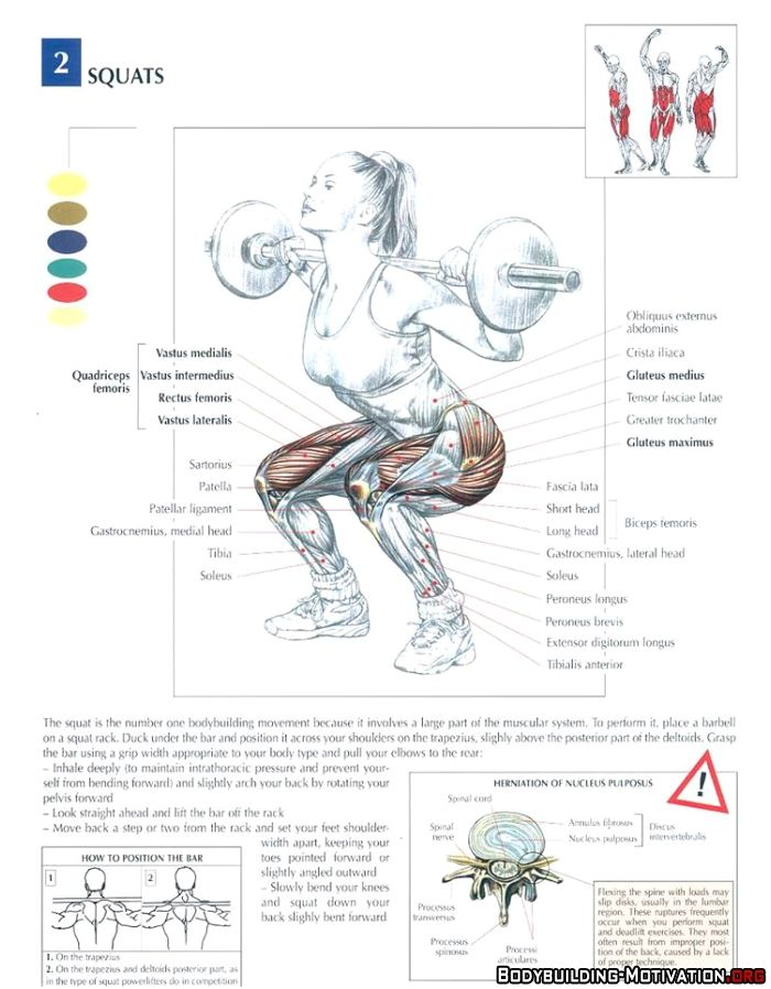 anatomical script of the squat technique The squat technique is described as the king of all exercises (bompa, 2002) as it is an effective exercise that works a variety of muscles including the gluteals, hamstrings, quadriceps and abdominals.