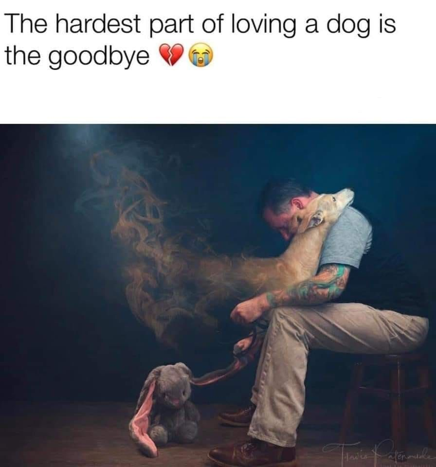 Pin By Dani H On Awesomeness Happy Dogs Dog Lives Matter Cute Dogs