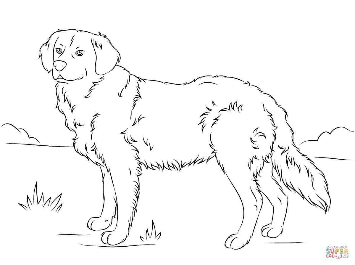 Golden Retriever Coloring Page Golden Retriever Coloring Page Free Printable Coloring Pages Albanysinsanity Com Dog Coloring Page Dog Coloring Book Golden Retriever Colors [ 895 x 1200 Pixel ]