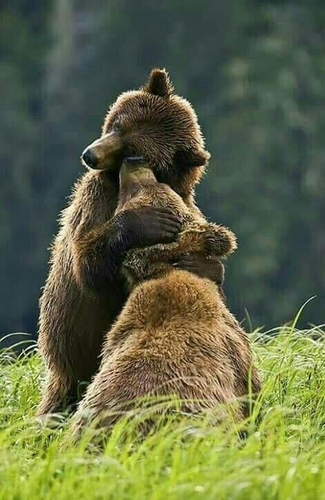 Bear Watching in Romania #bears