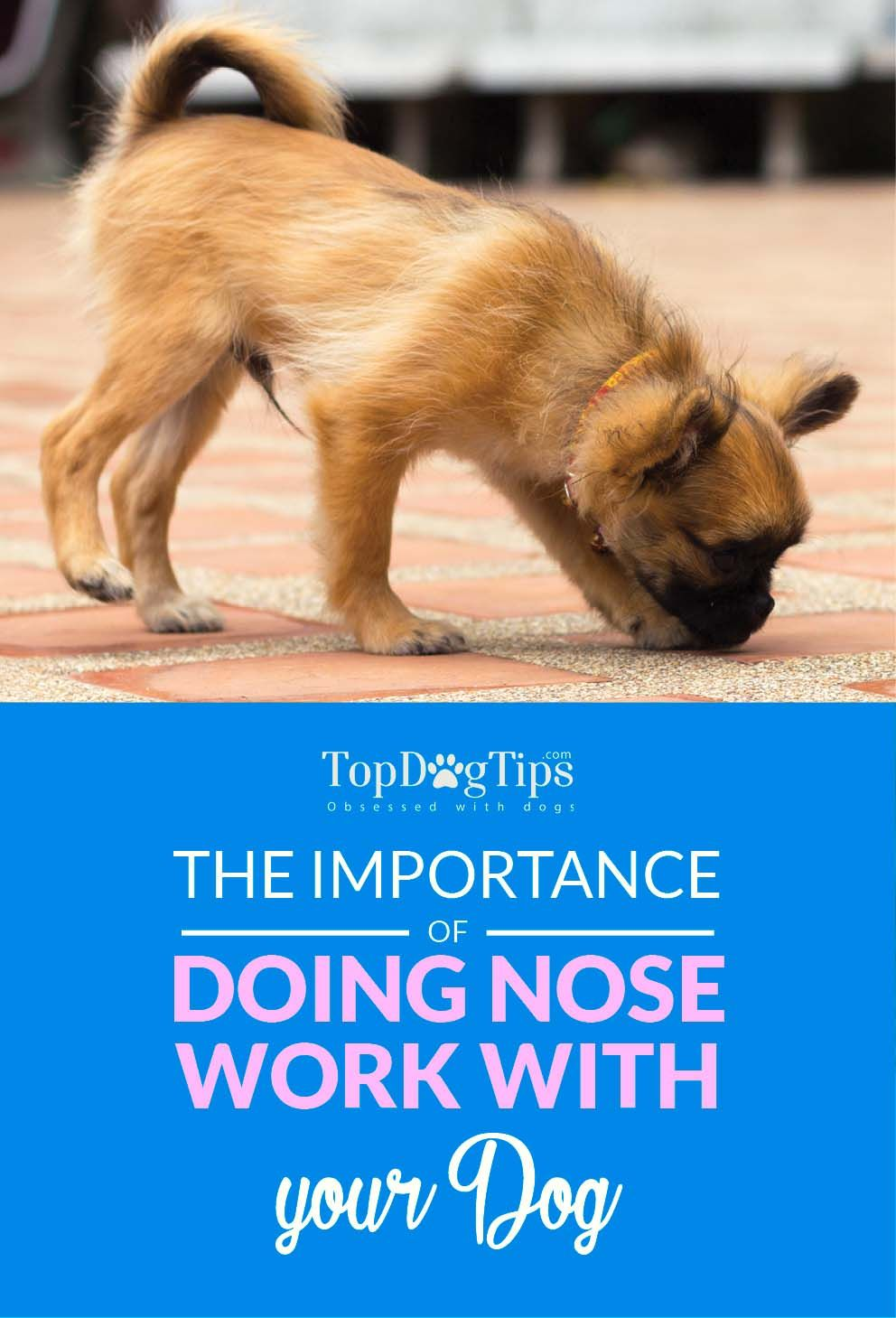 The Importance Of Nose Work For Dogs And How To Train Dogs For It