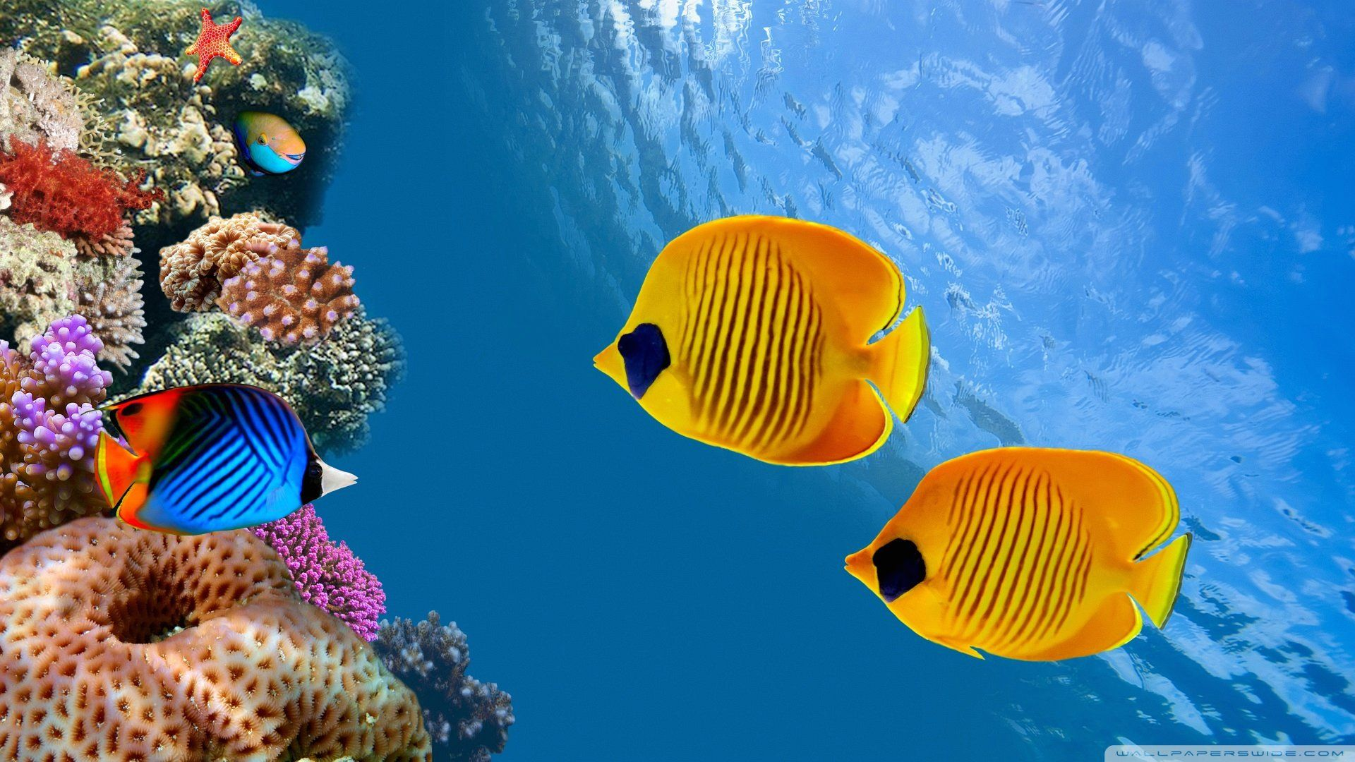 Fish Hd Wallpapers Backgrounds Wallpaper Fish Wallpaper Underwater Wallpaper Animal Wallpaper