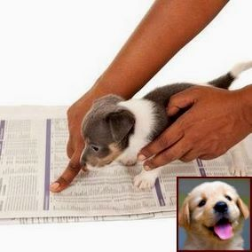 House Training A Puppy In Nyc And Dog Training Classes Petco Cost