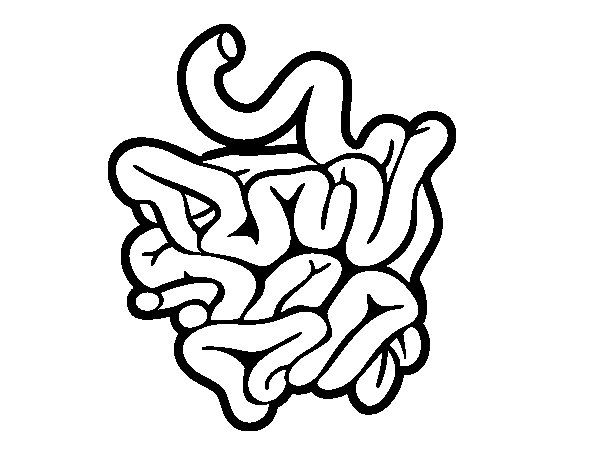 small intestine black and white coloring pages google search - Small Coloring Pages