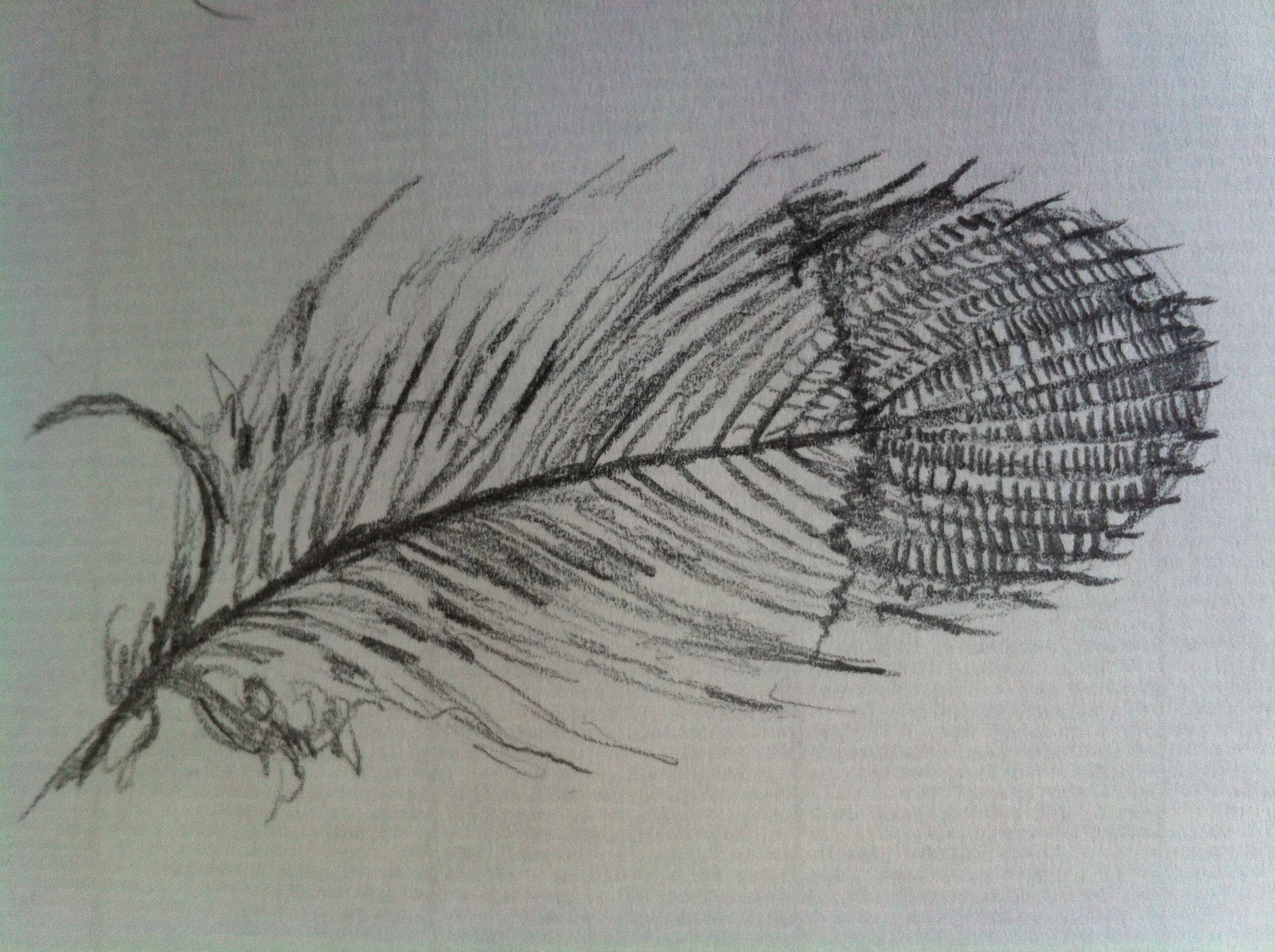 drawings hummingbird feather feather tattoos hummingbird tattoo