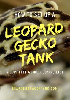 setting up a leopard gecko tank can be hard if you are a beginner rh pinterest com A Guide to Marijuana A Guide to Marijuana