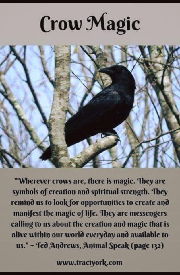 Pin By Tara Marie L On Pagan Pinterest Crows Magick And Healing