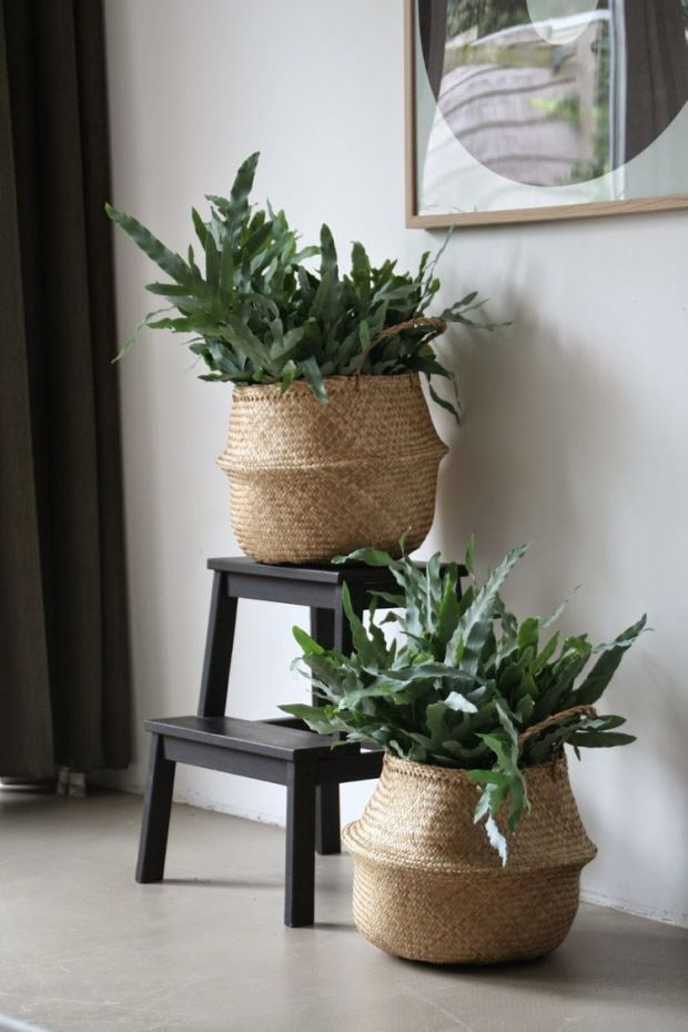 Rieten Manden Voor Planten.Plant In Rieten Mand En Krukje Ikea In 2019 Huis Ideeen