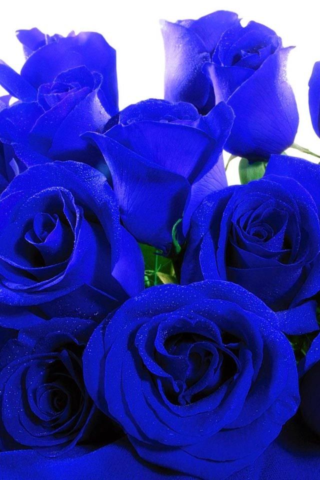 Royal blue roses- if they don't exist I'm sure you can ...