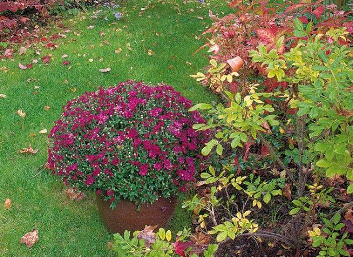 plantations d 39 octobre au jardin jardinage rustica. Black Bedroom Furniture Sets. Home Design Ideas