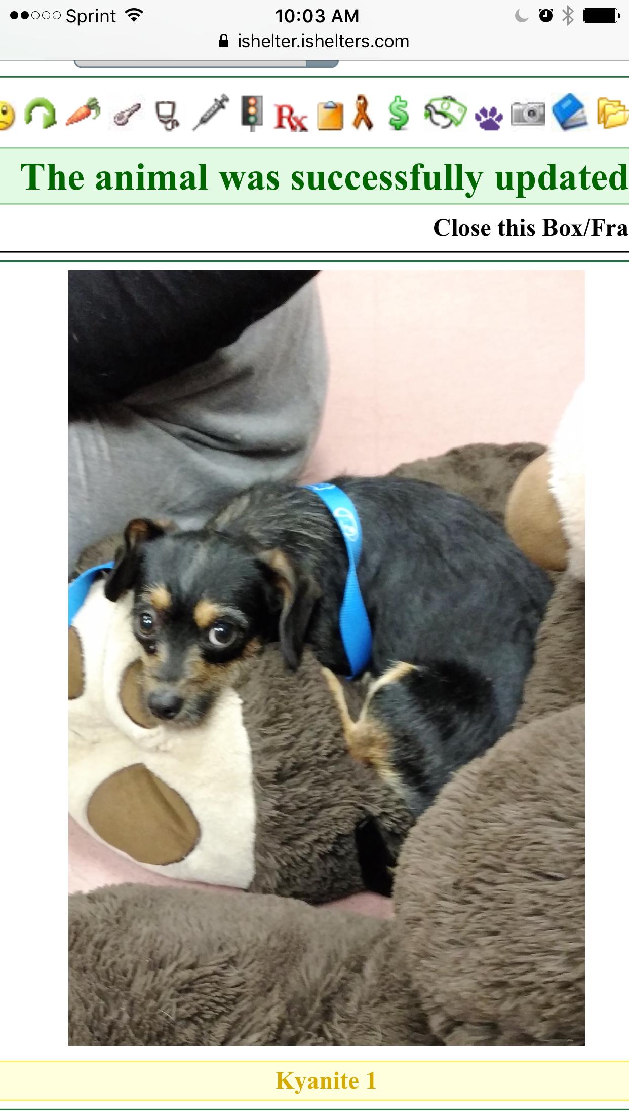 K9 Paw Print Rescue Bay Area California K9ppr Dogrescue Rescue Dogs Animals Rescue