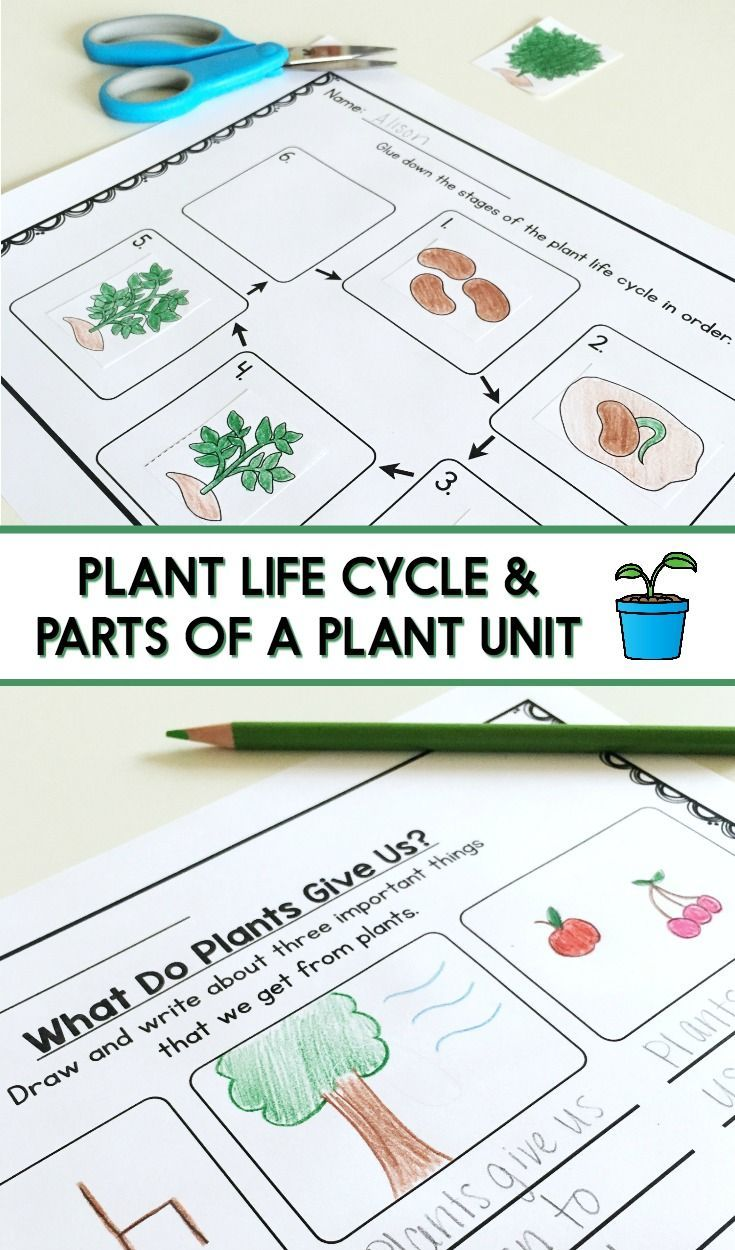 Plant Life Cycle And Parts Of A Plant Lesson Plans Writing Activities Worksheets Craft Leveled Plant Life Cycle Plants Life Cycle Activities Plant Lessons [ 1250 x 735 Pixel ]