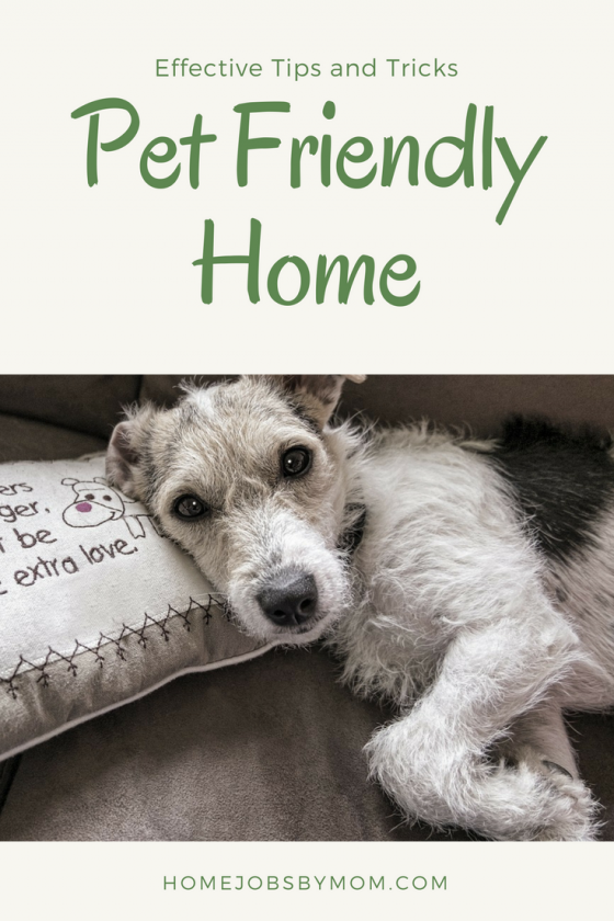 How To Have A Pet Friendly Home Home Jobs By Mom In 2020 Pet Friendly Pets Natural Pet Care