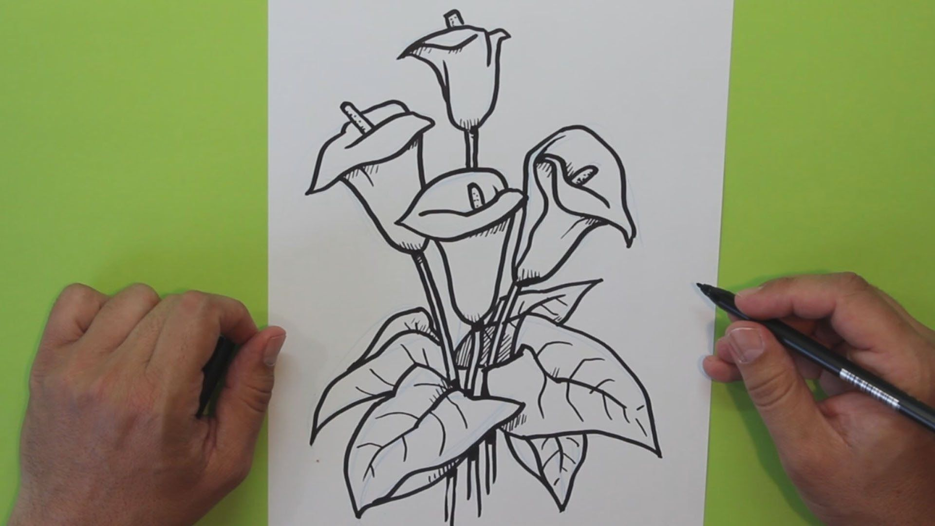 Cómo dibujar una flor Cala (Alcatraz, Lirio de agua) - How to draw ...