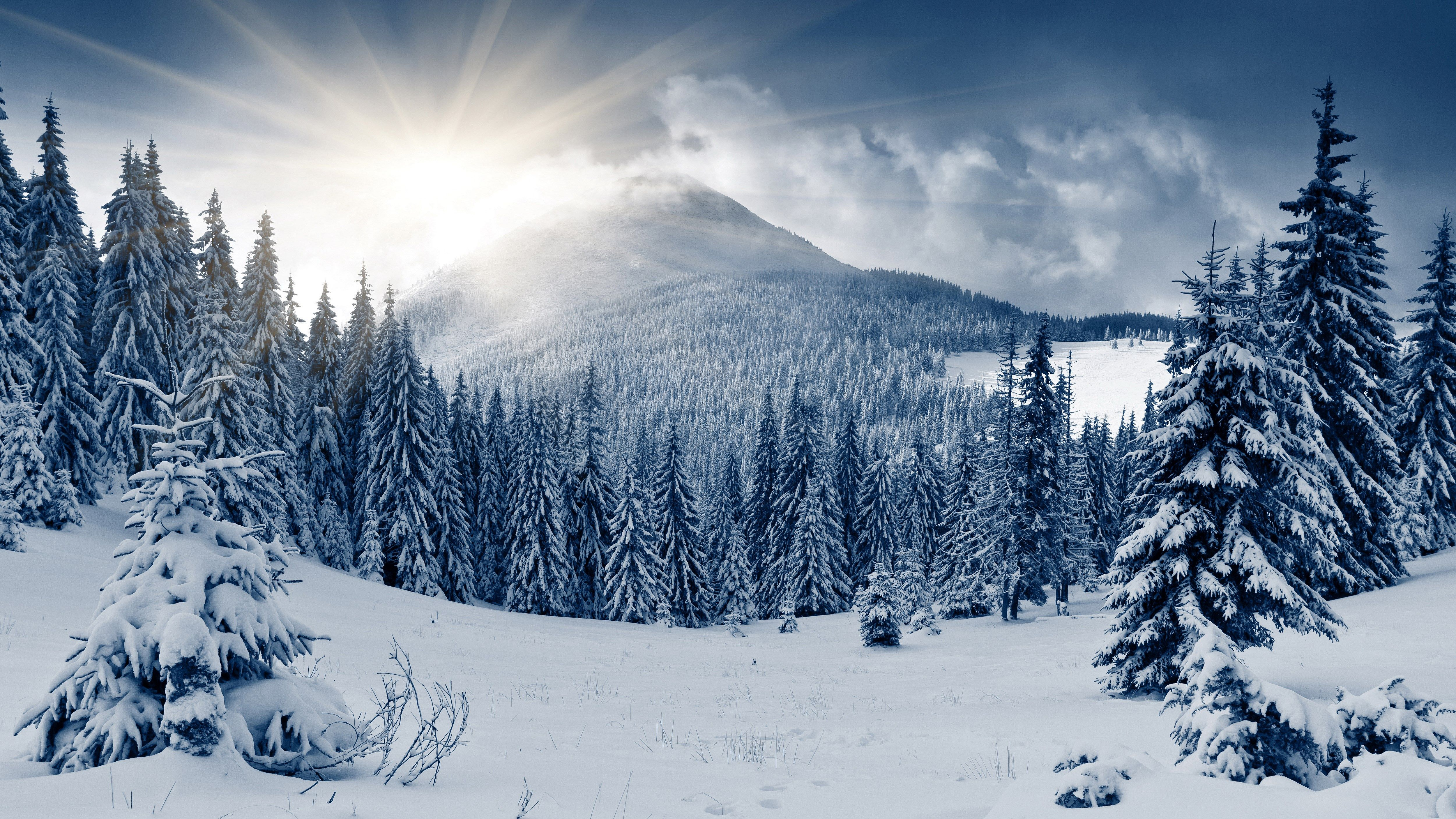 Winter Scenes Desktop Backgrounds Free 5000x2812 Winter Forest Winter Landscape Forest Wallpaper