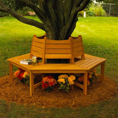 We Plan To Build A Bench Around Our Hickory Tree As An
