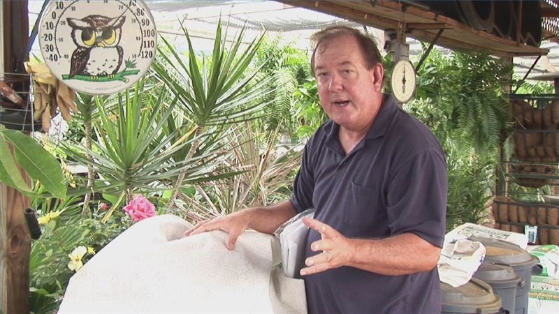 Video: How to Winterize Knockout Roses