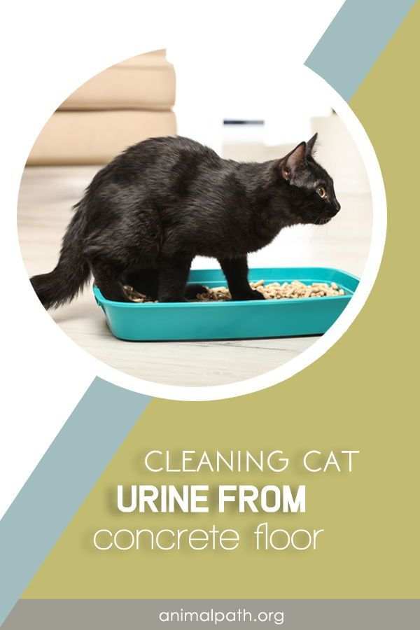 how to clean cat urine from concrete floor