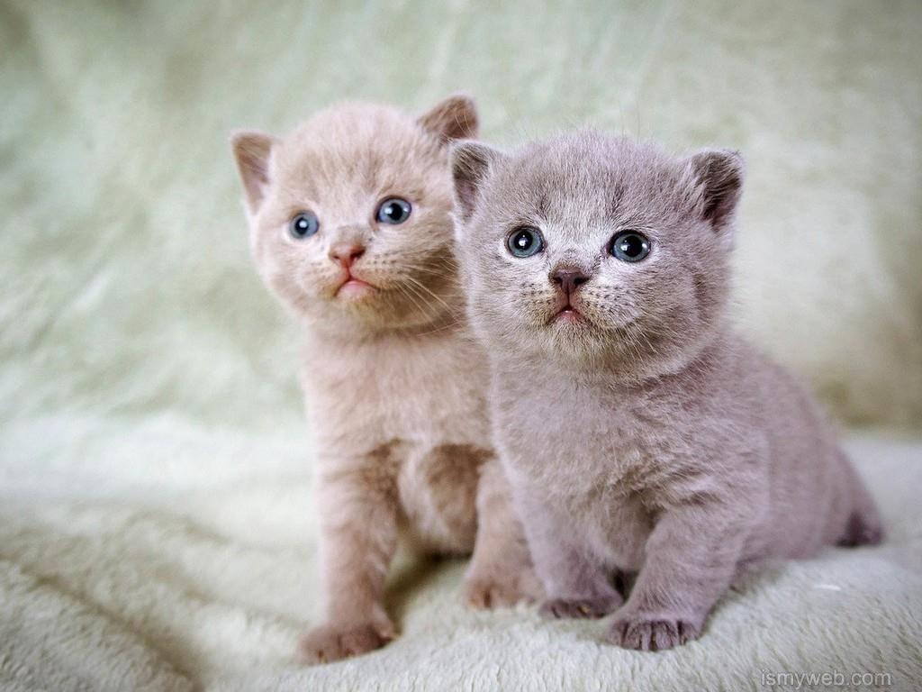 cute cat desktop wallpaper 1