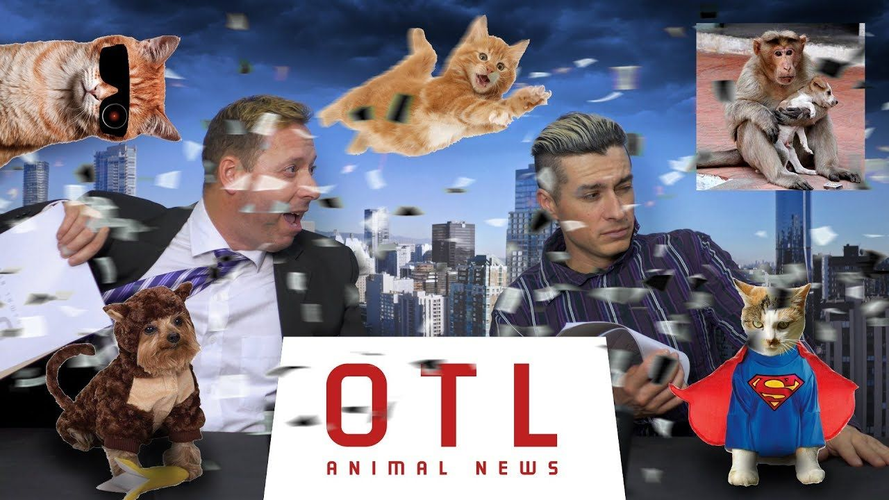 OTL animal news cat saves a child from a pitbull attack