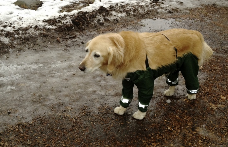 4 Legged Dog Pants Turns Out They Re A Good Idea After All Dog Pants Dogs Mutt Dog