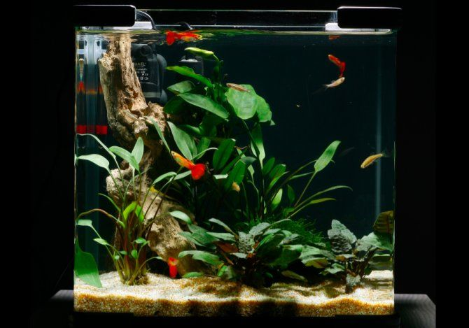 Guppy nano practical fishkeeping aquarium for Nano cube fish tank