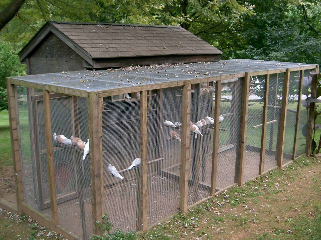 The Coocoo House is my dove loft located in Connecticut. I
