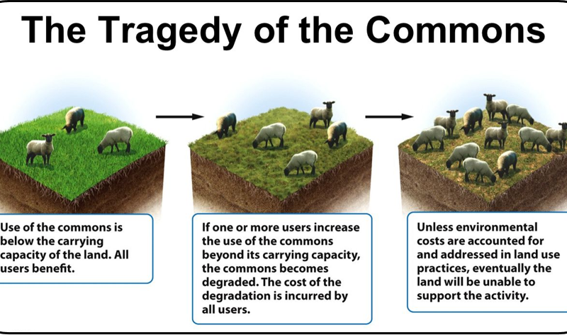 Tragedy Of The Common Sustainable Environment Online Hardin Essay By Garrett Question