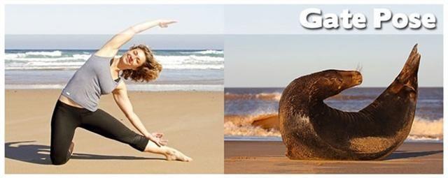 Yoga Positions Women Vs Animals