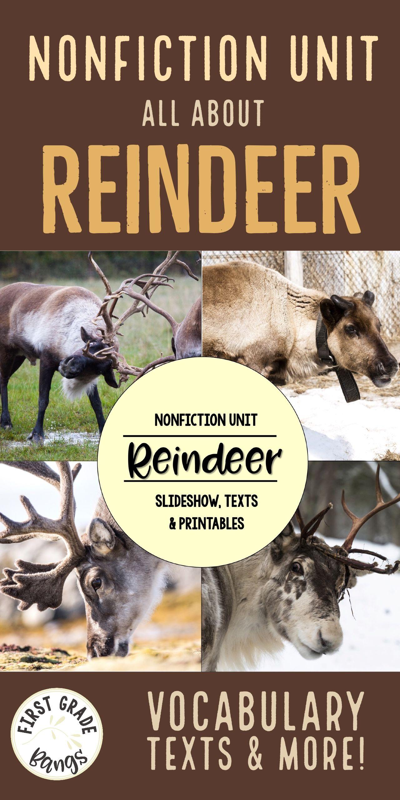 Reindeer Nonfiction Close Reading Amp Visual Vocabulary Unit