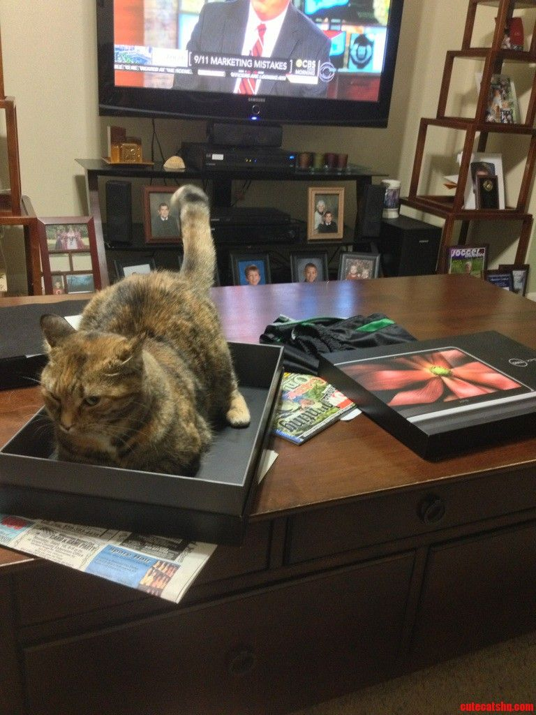 So I Got This New Laptop… - http://cutecatshq.com/cats/so-i-got-this-new-laptop/