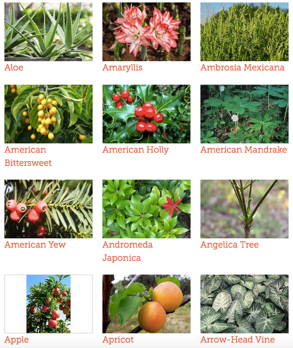 Toxic and NonToxic Plants List for Dogs, Cats and Horses