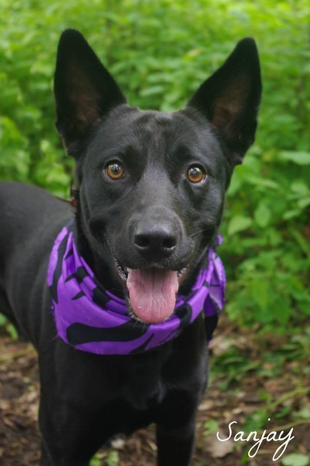 Adopt Sanjay on Dog pounds, Cats, kittens, Pets