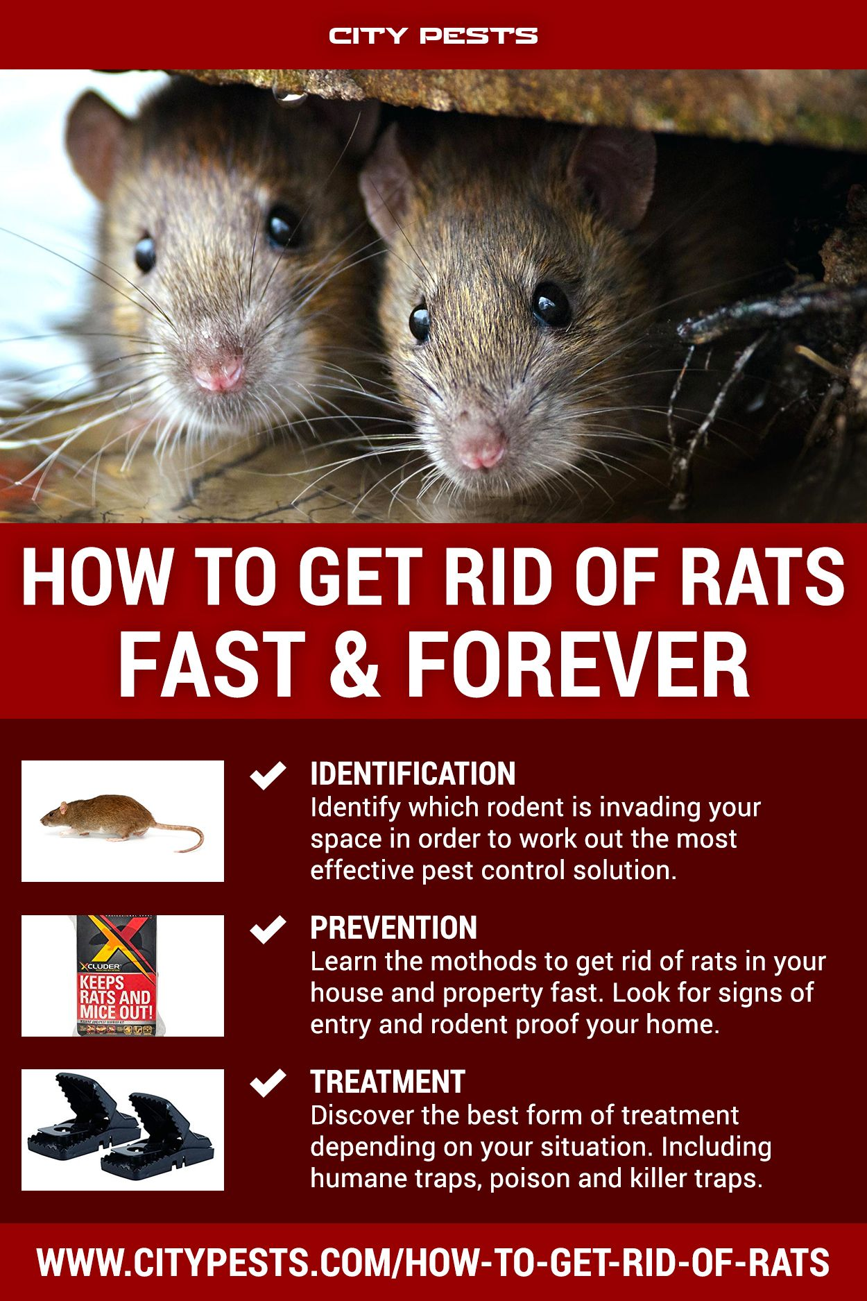 How To Get Rid Of Rats 2020 Getting Rid Of Rats Rat Infestation