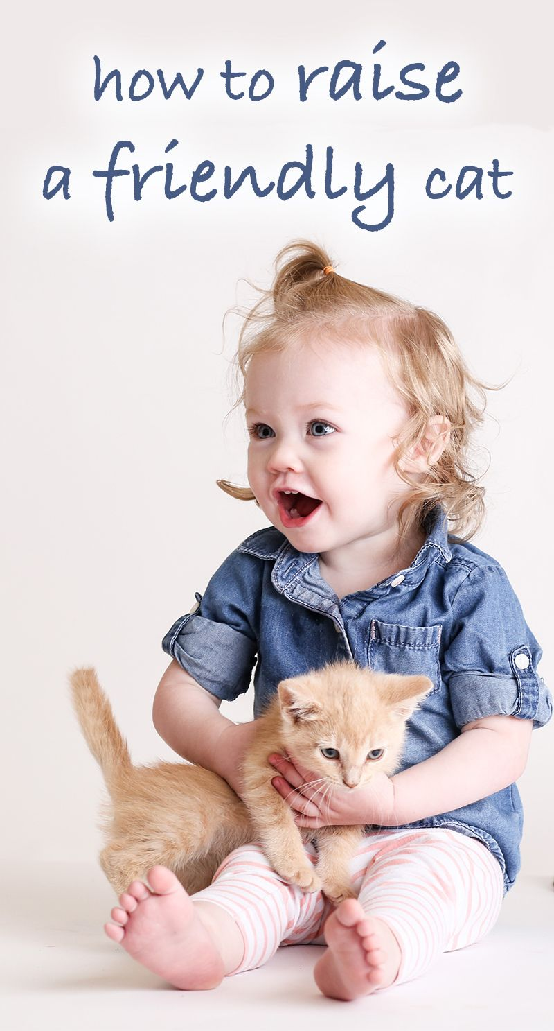 How to raise a friendly cat kitten and rescue cat