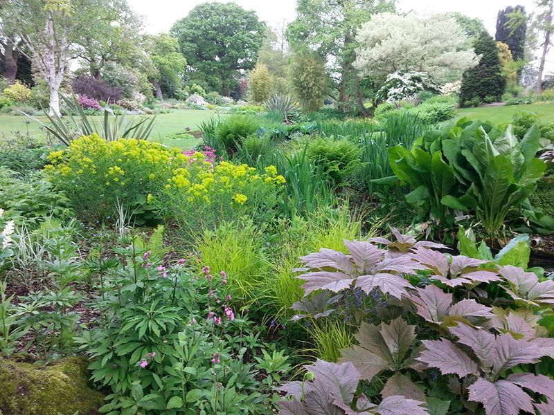 The Canal Bed - Beth Chatto garden