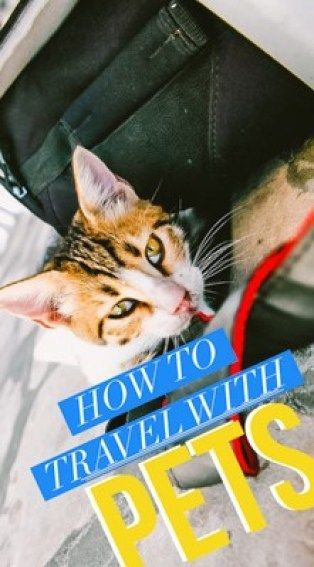 International Pet Travel Tips Your Guide To Taking Pets Abroad Pet Travel Travel Tips Pets