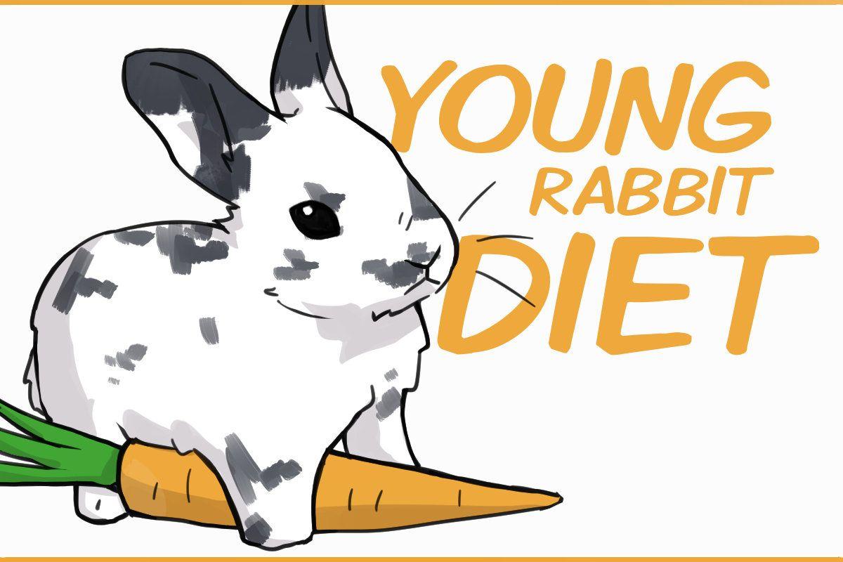 wild rabbit food pellets