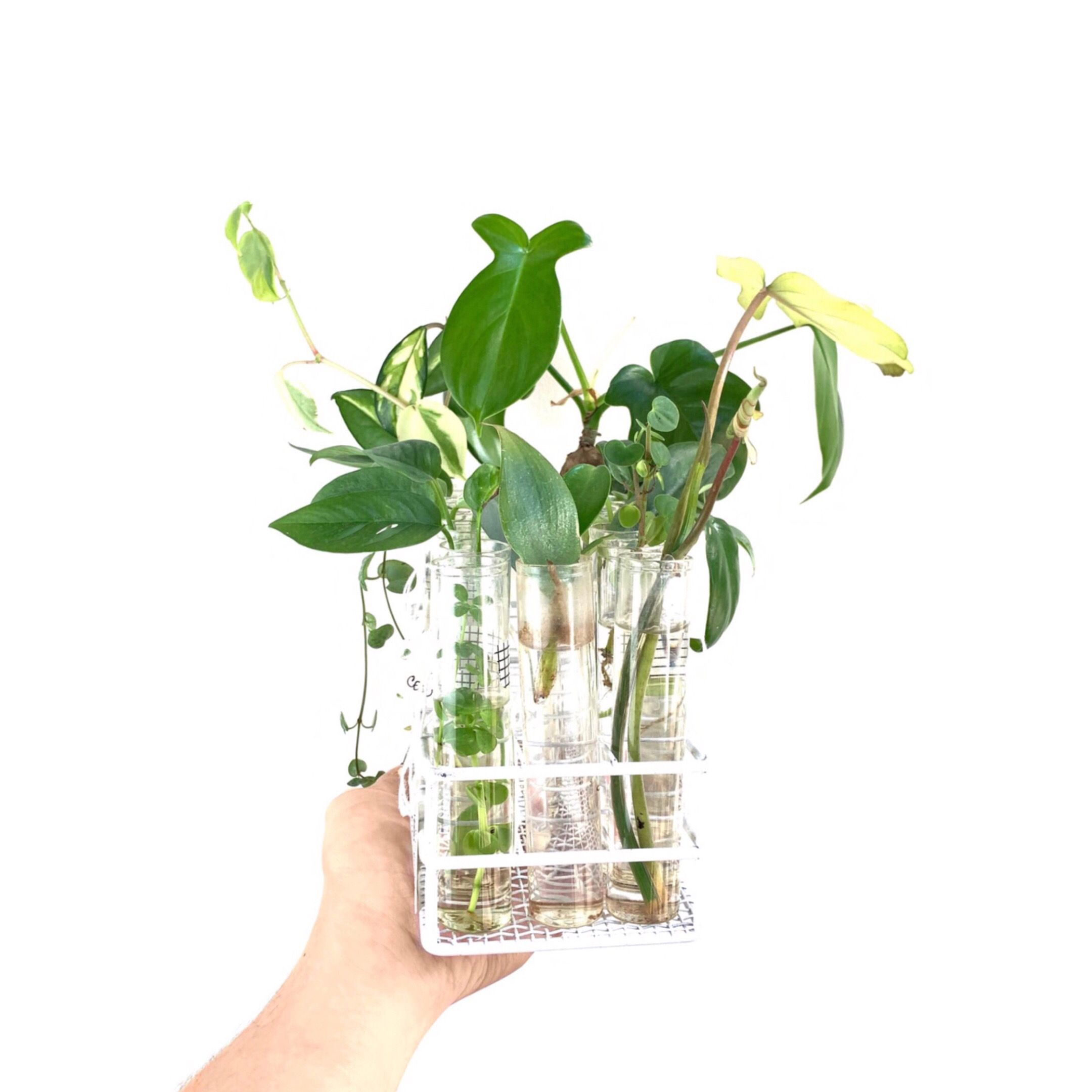 Propagating Cuttings  #propagationstation #PhilodendronMayoi #plantcuttings #plantswap #propagate #philodendronhastatum #cebublue #monsteraperu #currentlypropagating #propagation #propagating #Planttrade #rareplants #tradeplants #houseplantcommunity #plantenabler #talkplantytome #plantfriends #plantcommunity #indoorplants  #houseplants #houseplantplantclub #plantcommunity #plantparenthood #planthoarder #flauntyourleaves  #coolplantkids #plantsmakepeoplehappy #urbanjunglebloggers #iplanteven