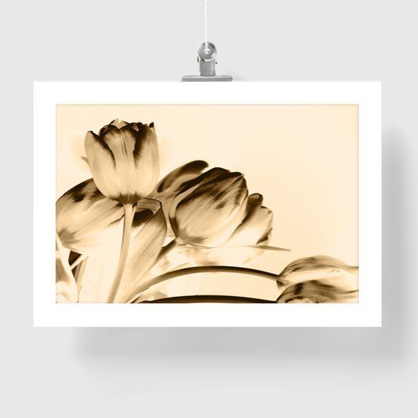 Modny Plakat Z Motywem Kwiatow Tulipanow W Sepii