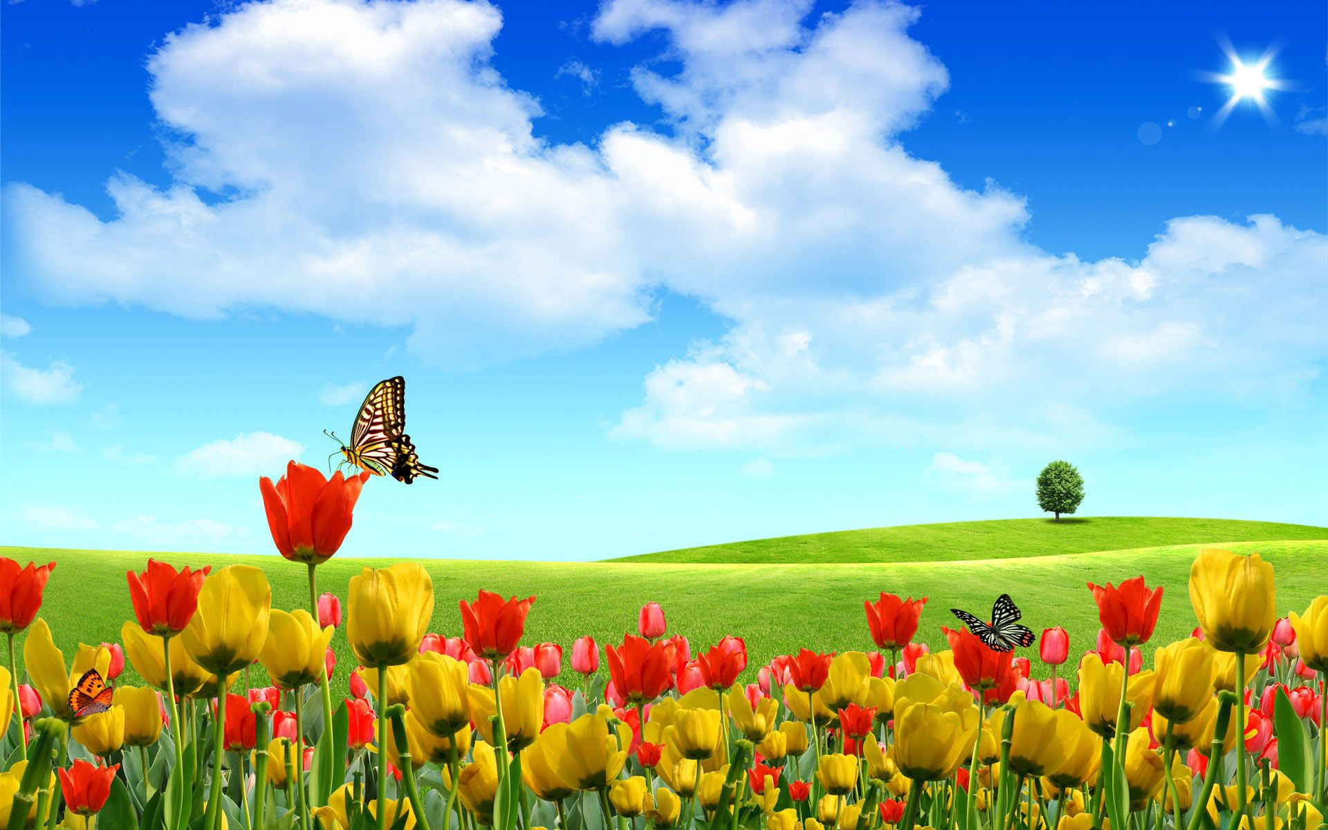 free scenery wallpaper includes beautiful buds boasting of its natural scene