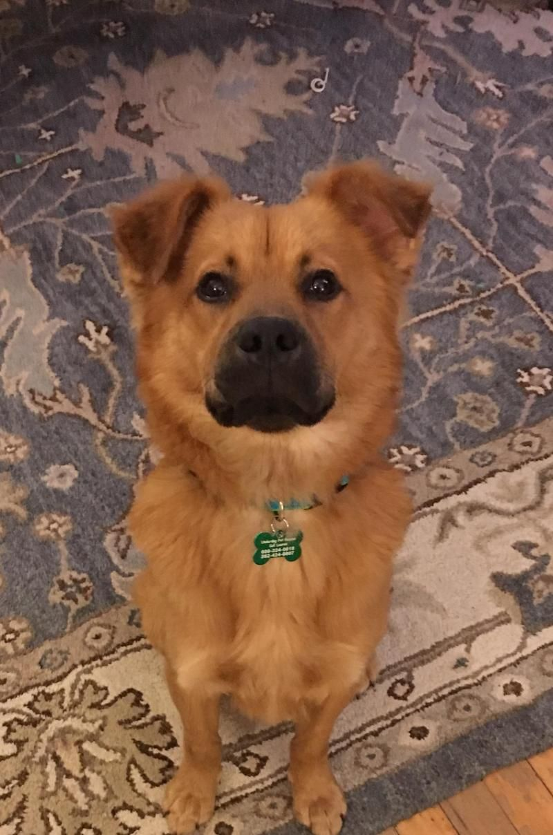 Adopt Bogart on | Dogs Only | Dogs, German shepherd dogs