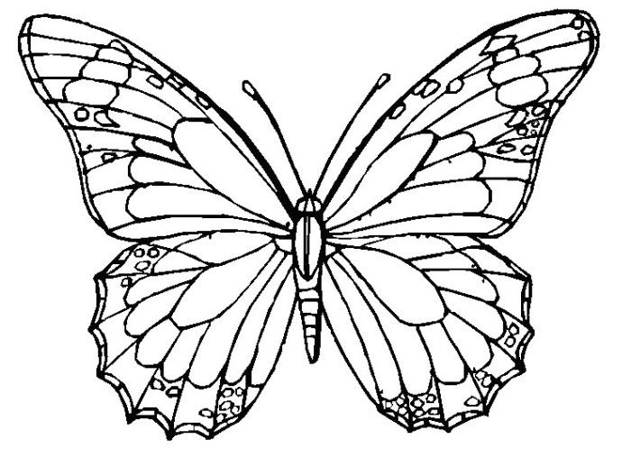 The Adult Butterfly Animal Coloring Pages - Butterfly Coloring Pages ...