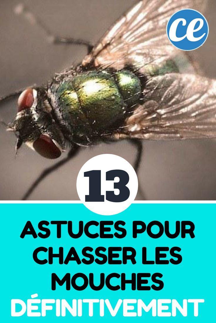 13 astuces naturelles pour chasser les mouches. Black Bedroom Furniture Sets. Home Design Ideas